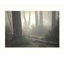 The Light of the Forest Art Print