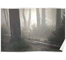 The Light of the Forest Poster