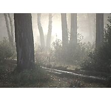 The Light of the Forest Photographic Print