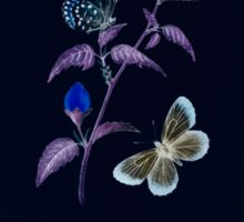 Aid to the identification of insects Charles Owen Waterhouse 1890 V1 V2 108 Lycaena Iburiensis Inverted Sticker