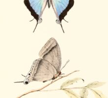 Aid to the identification of insects Charles Owen Waterhouse 1890 V1 V2 046 Purlisa Gigantea Penang Sticker