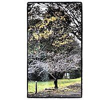 Autumn Strikes Photographic Print