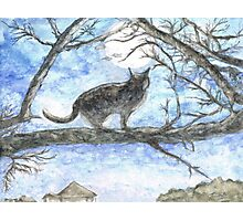 Moon Cat Photographic Print