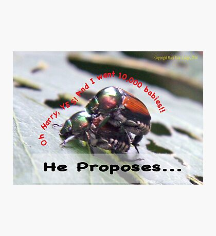 He proposes, and she wants lots of babies… Photographic Print