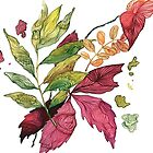Autumn leaves, watercolor illustration by SolomatinaY