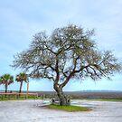 Inlet Oak by Kathy Baccari