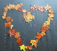 heart shape of leaves with black wallpaper by newbietraveller