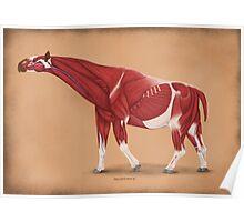 Paraceratherium anatomical study Poster