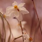 Narcissus 2 by Bethany Helzer