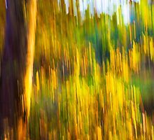 Abstract Nature -  Blurred Trees by Tess Masero Brioso