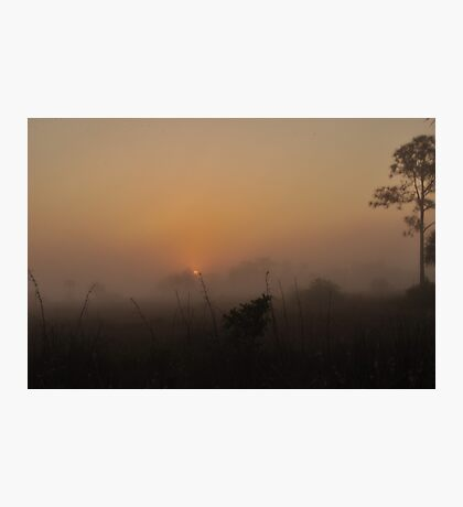 Foggy Sunrise in the Everglades Photographic Print