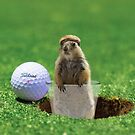 Gopher Golf by Randy Turnbow