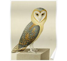 Joseph Nicolas Robert-Fleury - A Barn Owl. Bird painting: cute fowl, fly, wings, lucky, pets, wild life, animal, owls, little small, owl, nature Poster