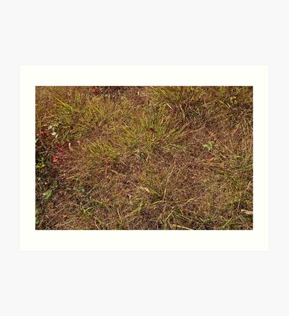 Dried grass Art Print