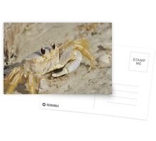Ghost Crab, As Is Postcards