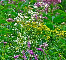 Mixed weeds 1 by Carolyn Clark