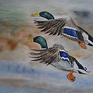 FLY PAST by Marilyn Grimble