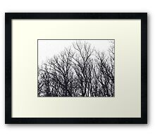 Trees Stamp Framed Print