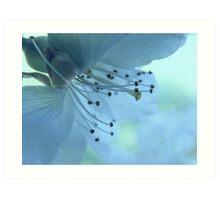 Blossoms #2 Art Print