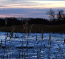 Buckhorn Pond Before Dawn Sticker