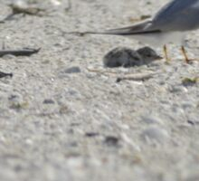Mama and Baby Tern, As Is Sticker