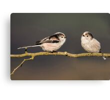 Two Little Tweets Canvas Print
