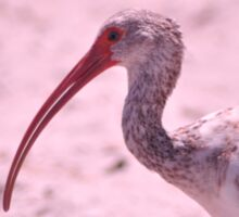 Young Ibis, As Is Sticker