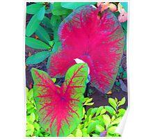 colorful nature - naturaleza de colores Poster