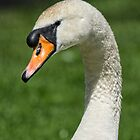 Mute Swan Portrait by M.S. Photography & Art