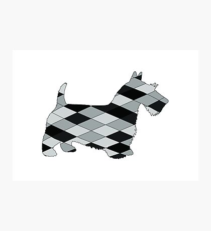 Scottish Terrier Photographic Print