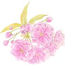Spring Prunus pink double tree blossom by Sarah Trett