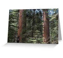 Forest Giants Greeting Card