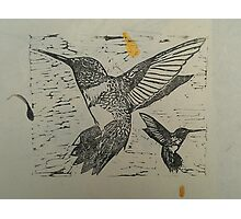 Pretty black ink hummingbirds on petal paper Photographic Print