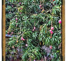 Mango Framed in Pipes by GolemAura
