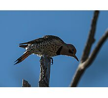 Flicker 1 Photographic Print