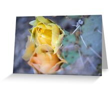 Prickly Pear Flowers Greeting Card