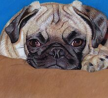 Adorable Pug Puppy Dog by Patricia Barmatz