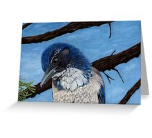 Pretty Western Scrub Jay Bird Greeting Card