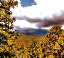 Tree Cloud by lorib