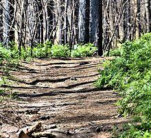 Nature Walk by lorib