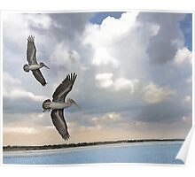 Pelicans of Cape Fear Poster