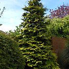 Conifer Tree by BlueMoonRose