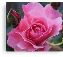 Newport Rose Canvas Print