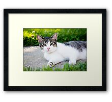 Unimpressed Cat Framed Print