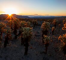 Cactus Forest by Chad Dutson