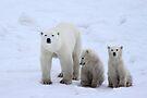 Polar Bears Family Portrait #3, Churchill, Canada by Carole-Anne