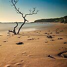 catherine bay beach tree nsw by damiankafe