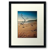 catherine bay beach tree nsw Framed Print