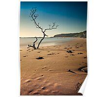 catherine bay beach tree nsw Poster