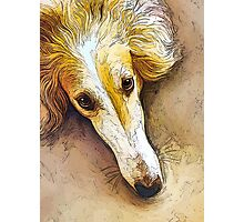Borzoi  in Repose  Photographic Print